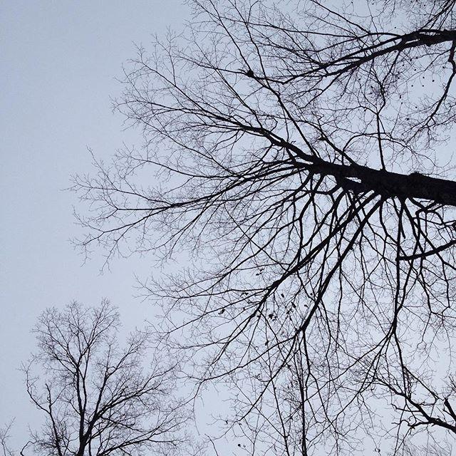 #silhouette #tree #etsysellersofinstagram #liveauthentic #livefolk #goodmorning #vscocam #morningslikethese