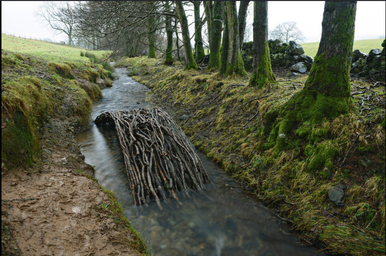 Alder branches form a bridge in a Dumfriesshire, Scotland, stream. (Jan. 17, 2014)