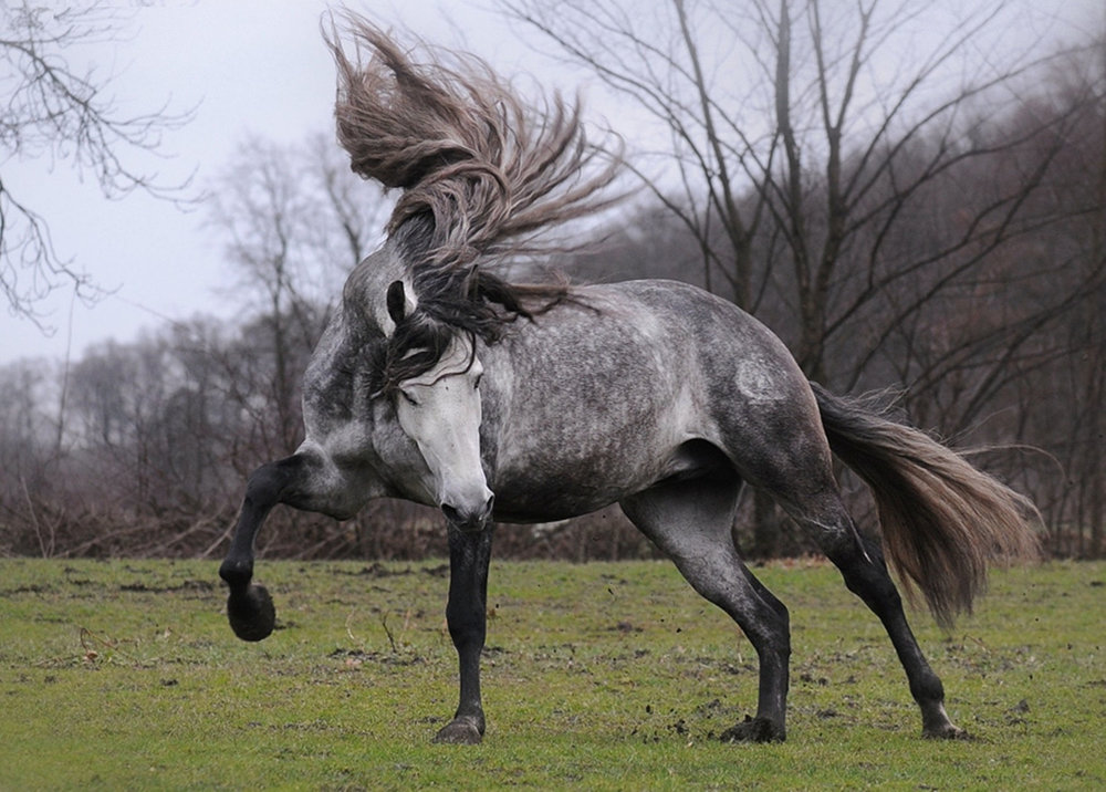 The 10 Most Beautiful Horse Breeds In The World!
