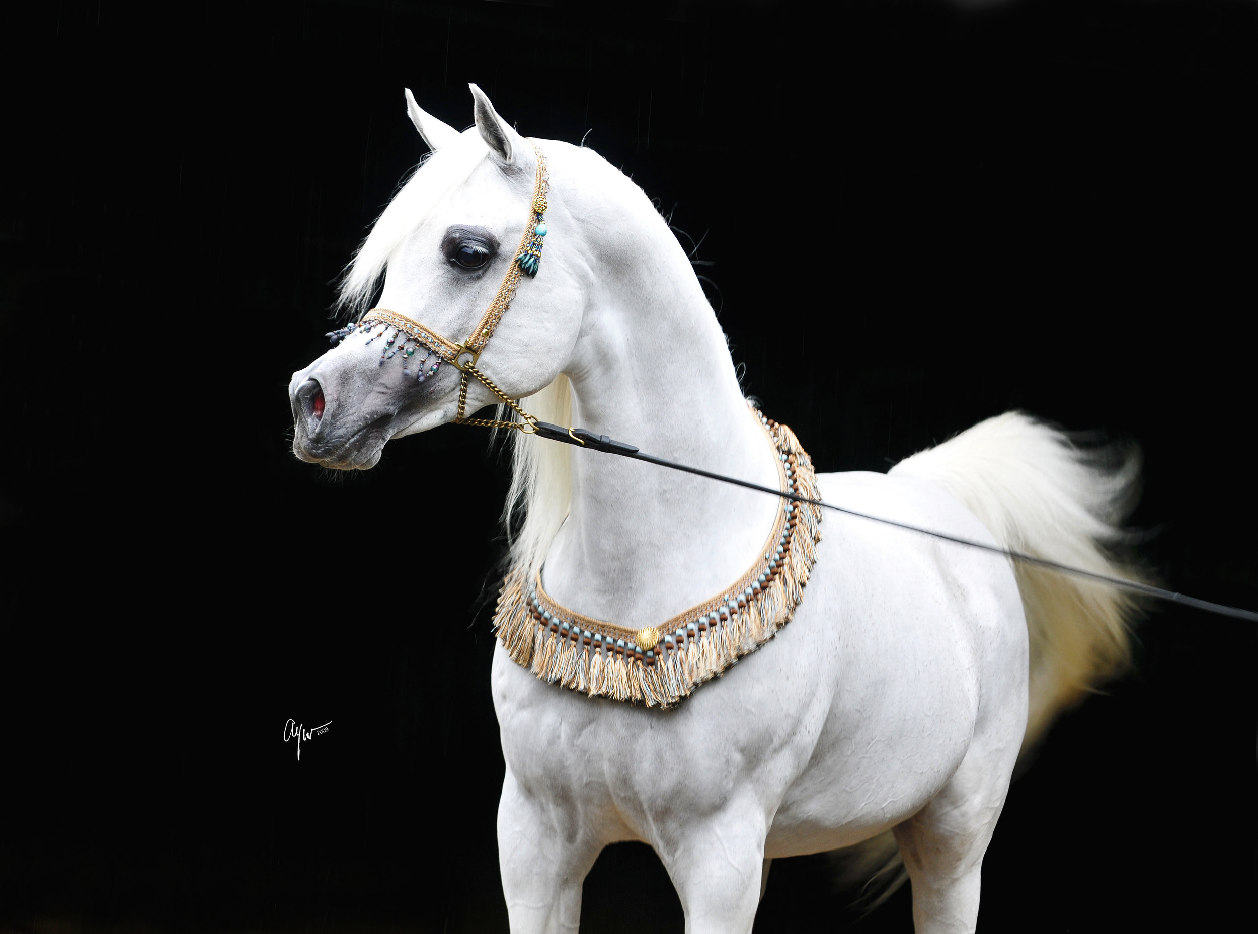 The 10 Most Beautiful Horse Breeds In The World I Love Nature
