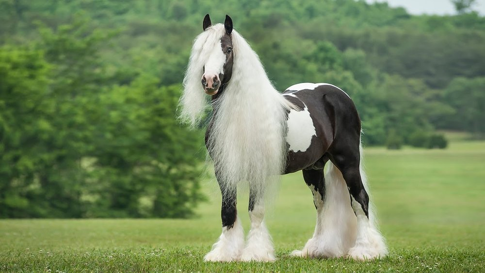 The 10 Most Beautiful Horse Breeds in the World! — I Love ... - photo#16