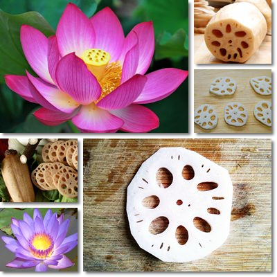 Lotus Flower and Lotus Root Slices