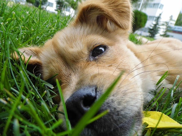 dog-in-grass.jpg