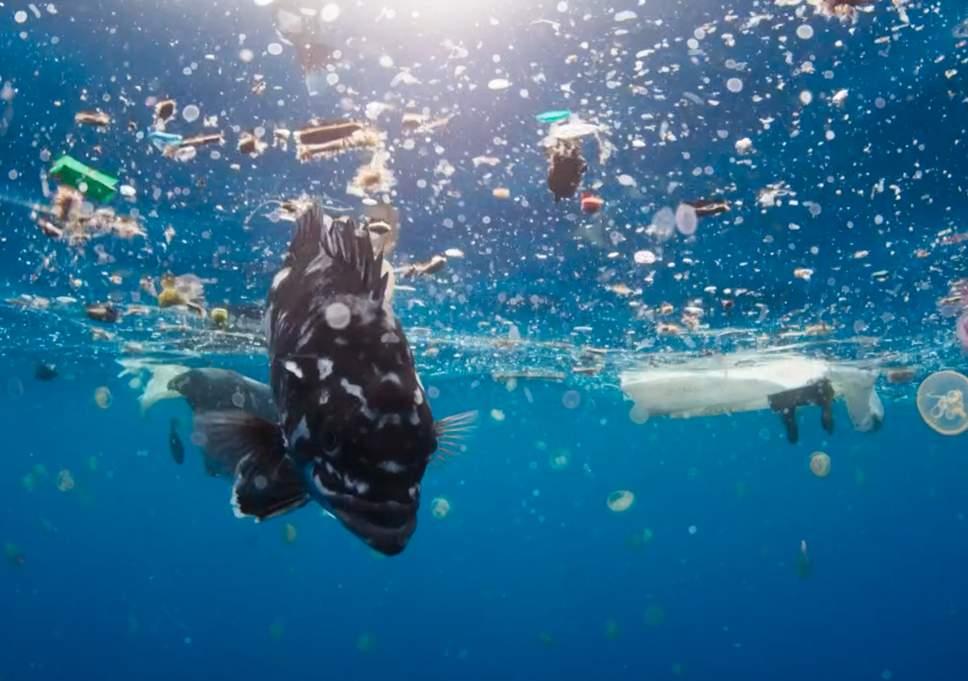 blue-planet-2-fish-plastic.jpg
