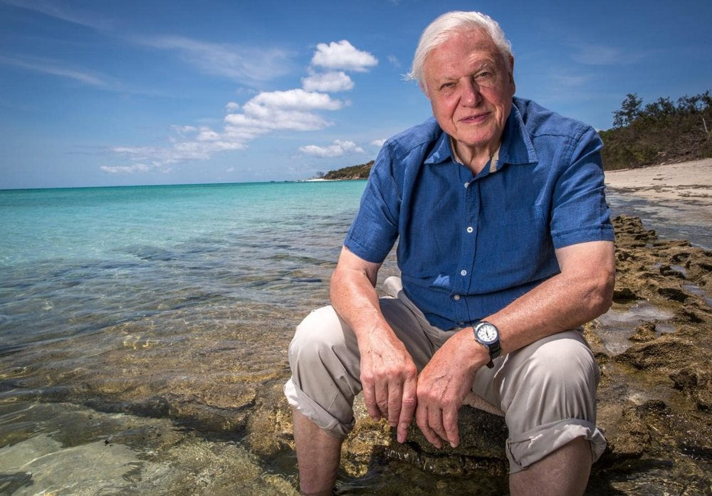 94836414-attenborough-birthday-features-xlarge.jpg