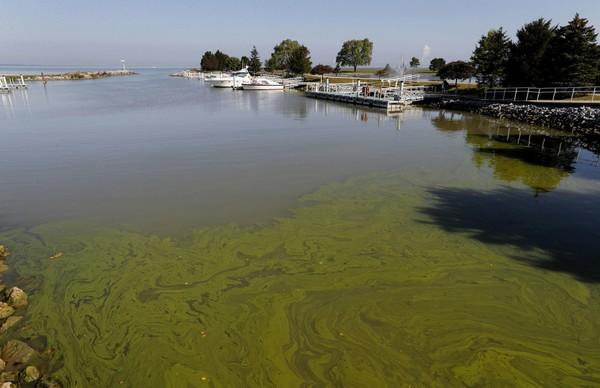 awash-in-algae-f49da1e6d82bbbaa.jpg