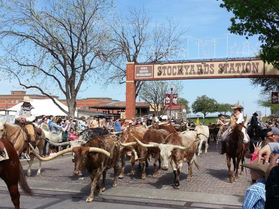 longhorn-cattle-drive.jpg