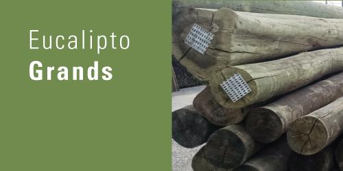 Eucalipto Grands   É a versão do eucalipto tratado com as fibras mais abertas. Para ser utilizada, é essencial que tenha antiracho.