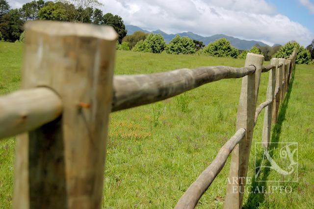 Cerca haras Eucalipto Citriodora Autoclavado , Piraquara - Pr