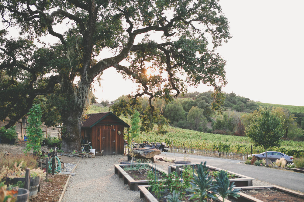 sonoma-county-healdsburg-wedding-photographer-arista-winery-vinyard-countryside