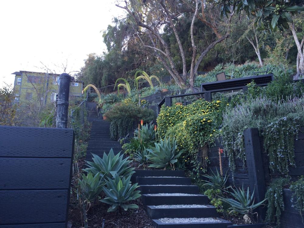 Salvesen Garden