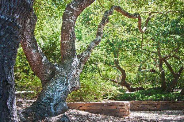a_forested_estate_ecotones_landscapes_11.jpeg