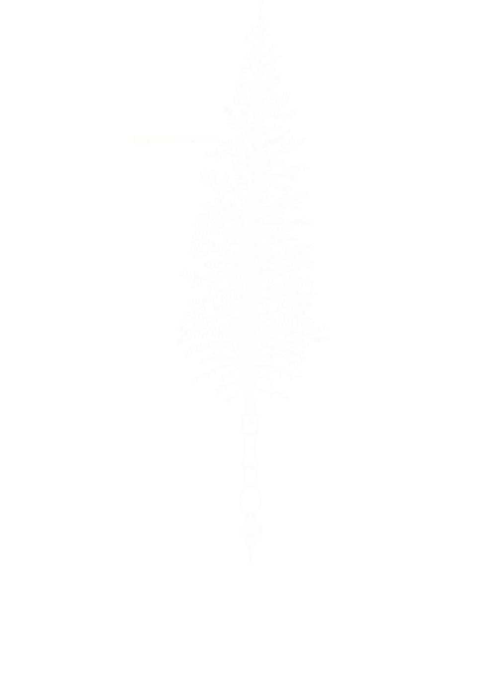 Fir + Feather