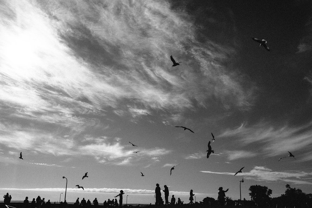 FUJI_X100S_duluth-seagulls_neopan1600-8246_1800.jpg