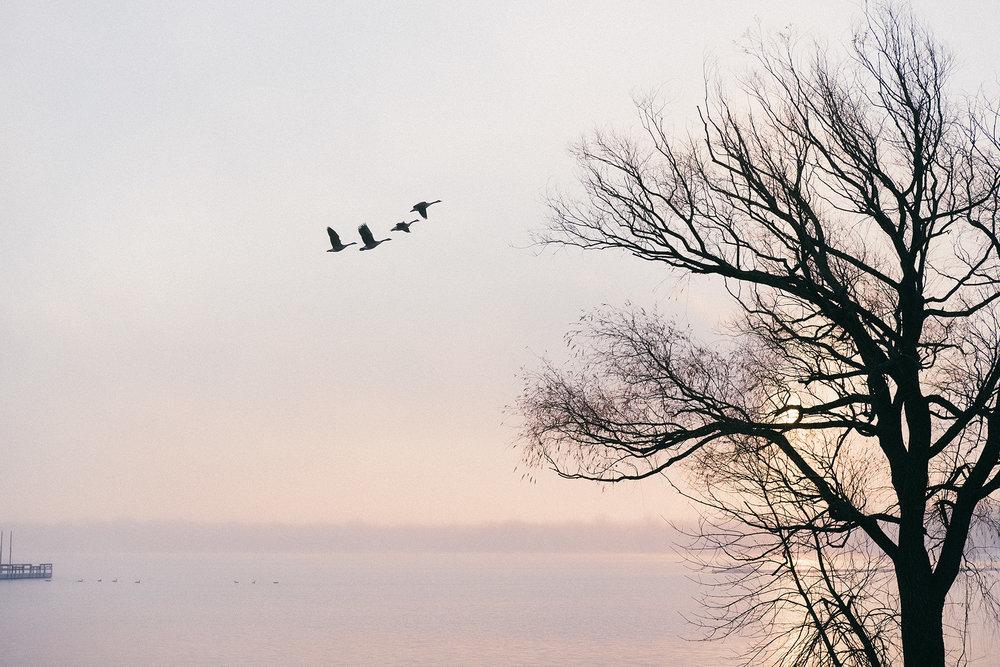 FUJI_XPro1_35f2_lake-calhoun-fog_superia400+-1883_1800.jpg