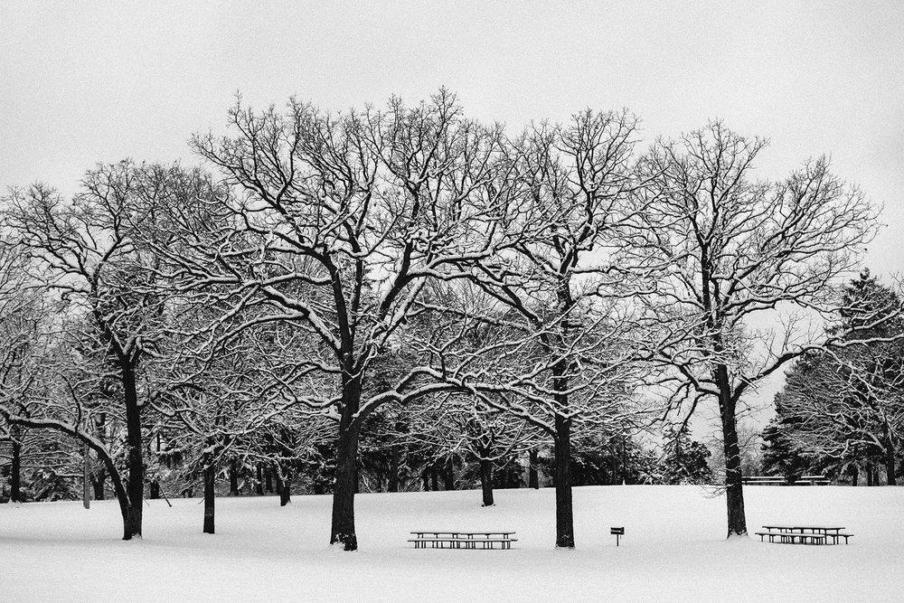 FUJI_X100s_50_snow-trees_neopan1600-3816_1800.jpg