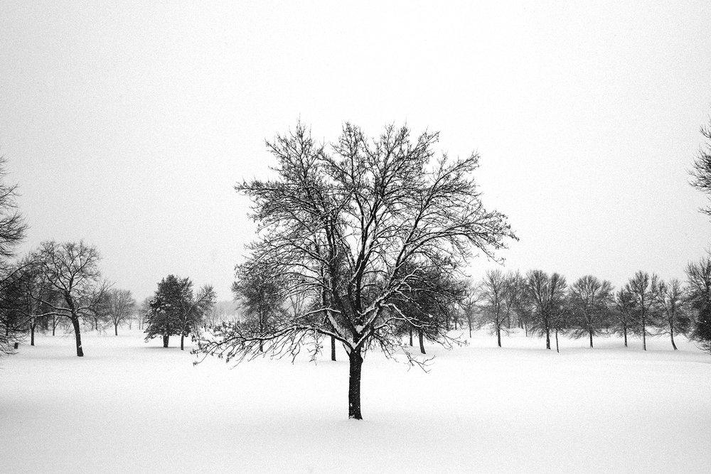 FUJI_XPro1a_18_minneapolis-winter-tree-3680_1800.jpg