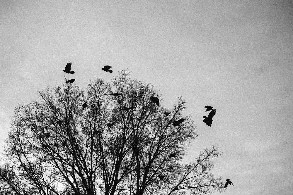 OLYMPUS_EM5II_25_minnesota_crows_neopan1600-510044_1800.jpg