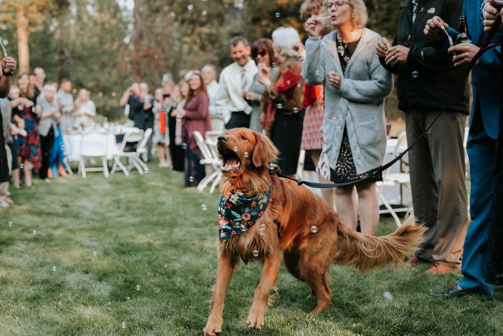 Sunriver Oregon Backyard Intamate Wedding- Grace and Jaden Photography (84).jpg