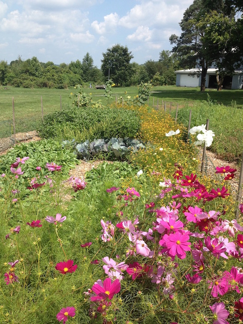 August in the Dye garden
