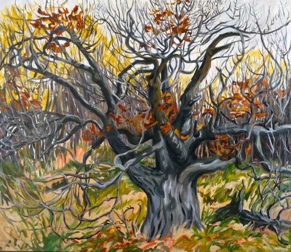 Apple tree, 50x56