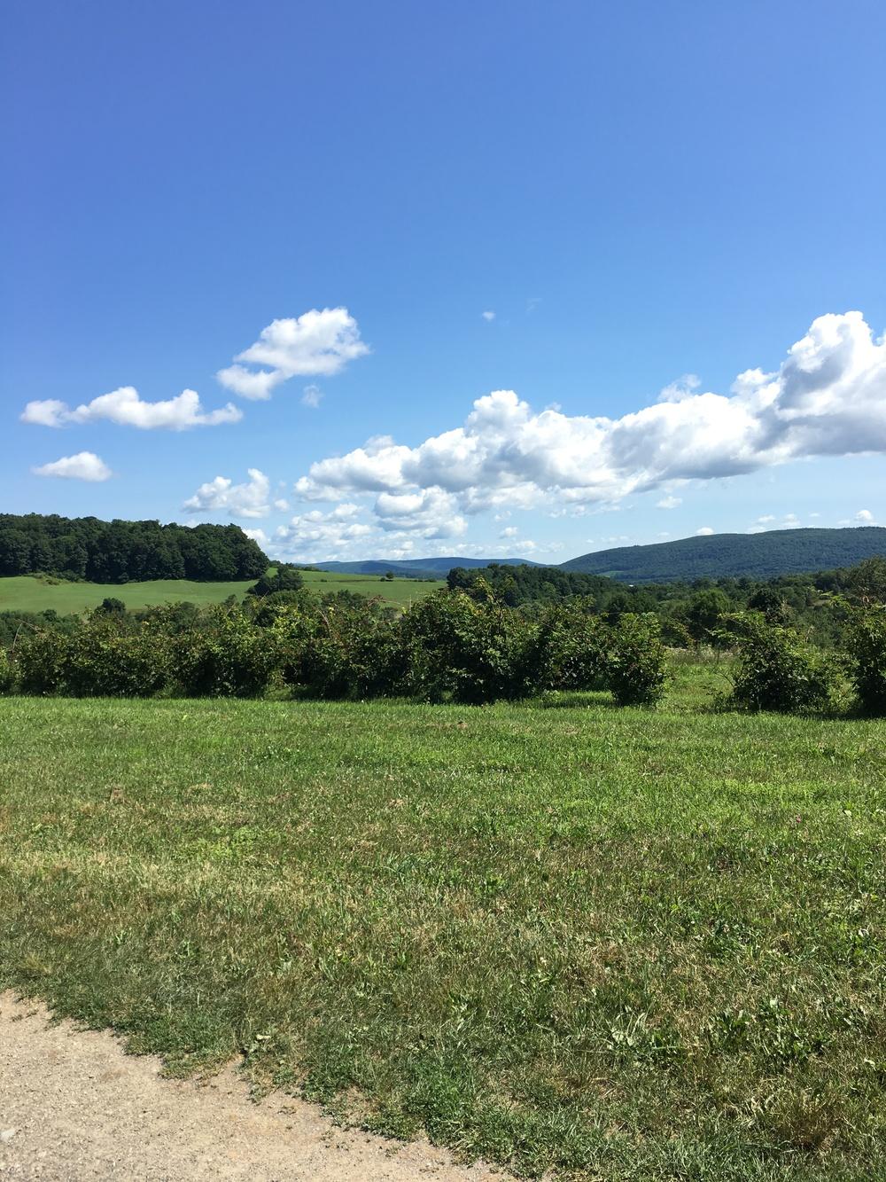 McEnroe Farms is so pretty.