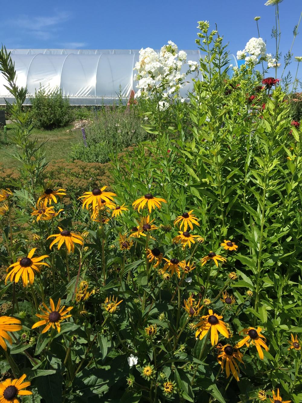 Perennial garden at the farm.