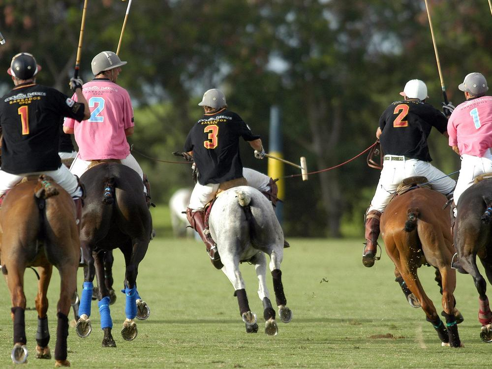 Polo matches in Barbados are wonderful afternoon entertainment.