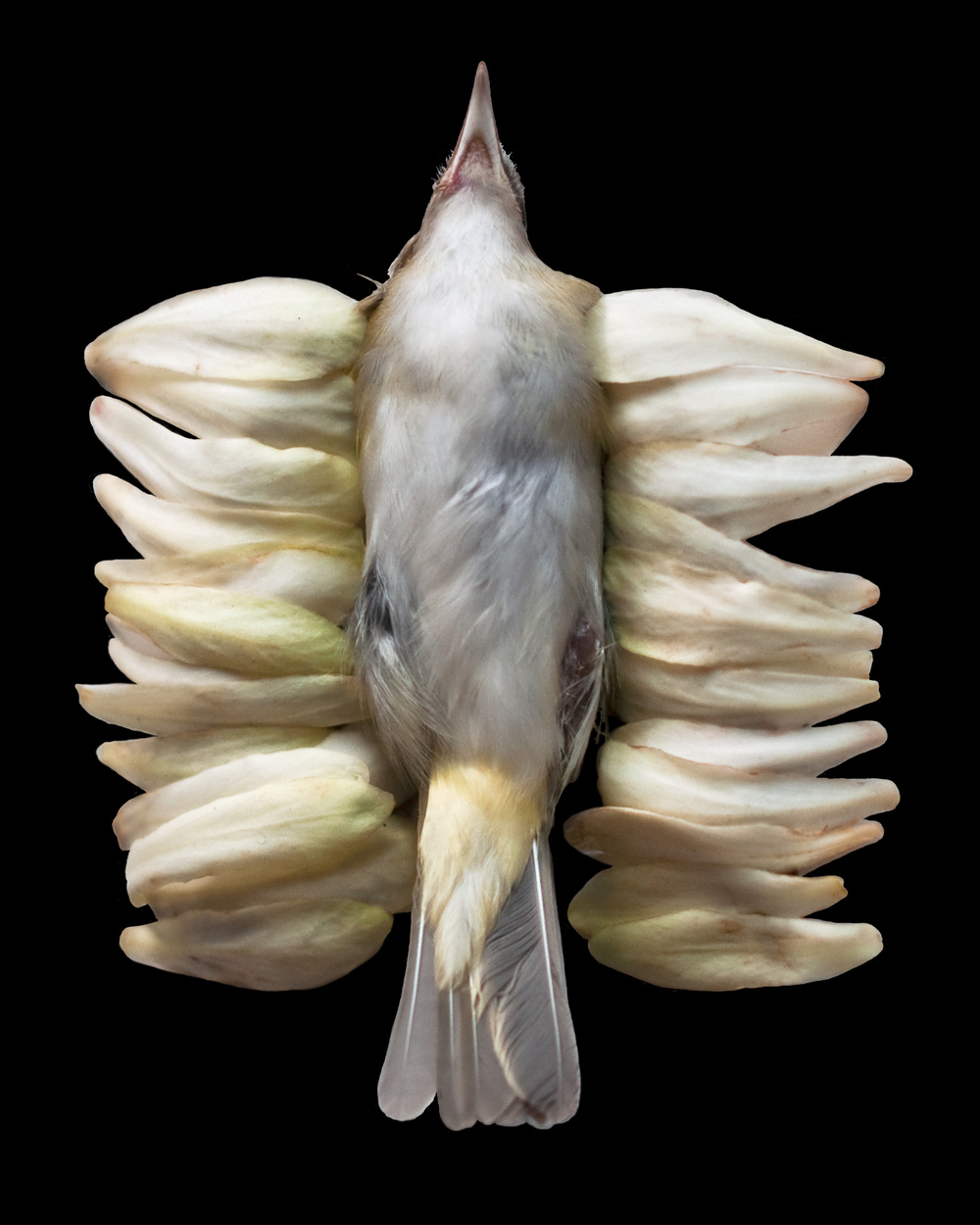 cecilia schmidt