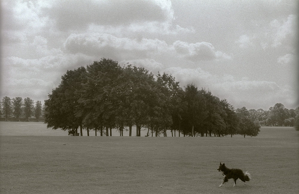 Border Collie and Trees by Len Bernstein