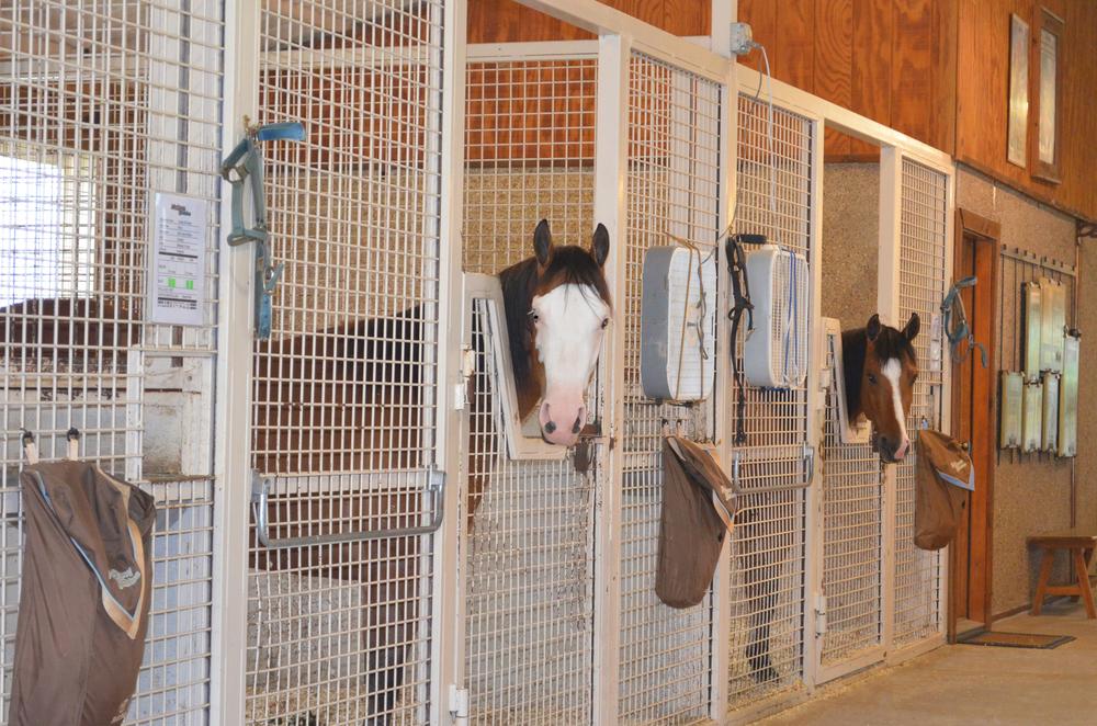 New Barn Stall.jpg