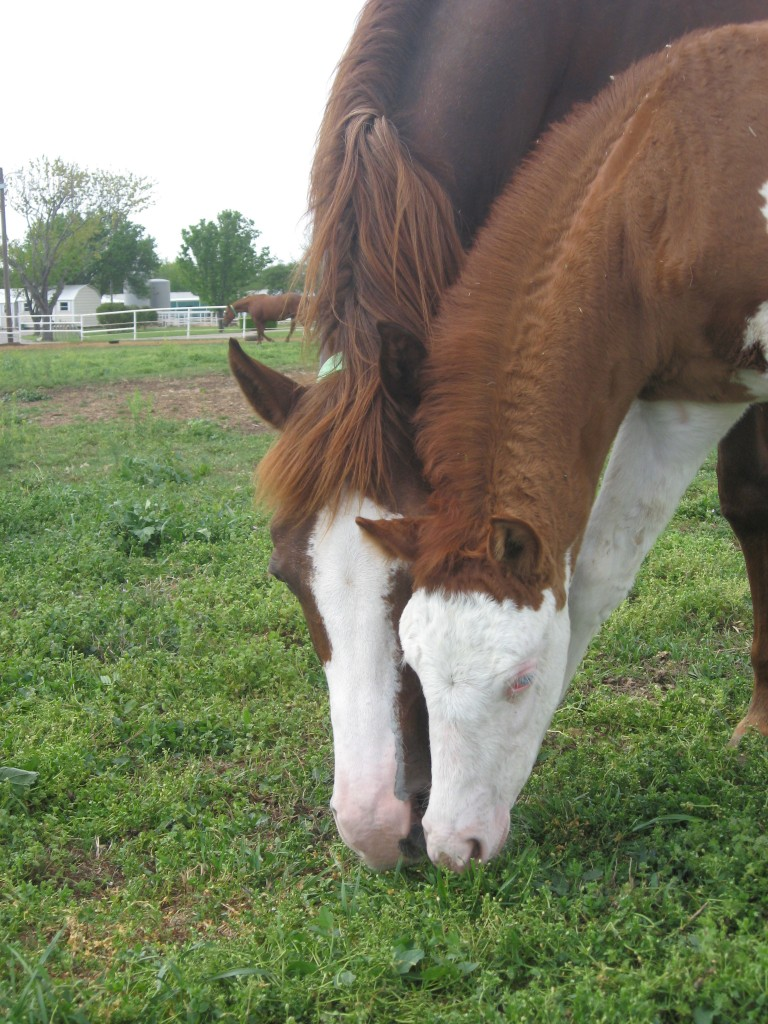 Broodmare and baby eat.jpg