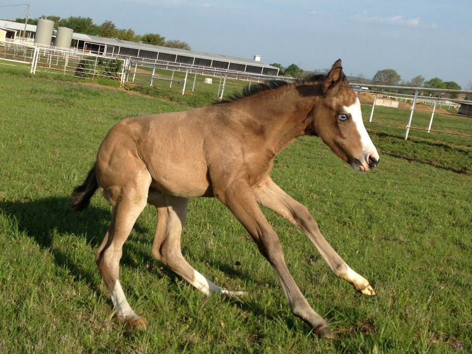 foal stopping.jpg