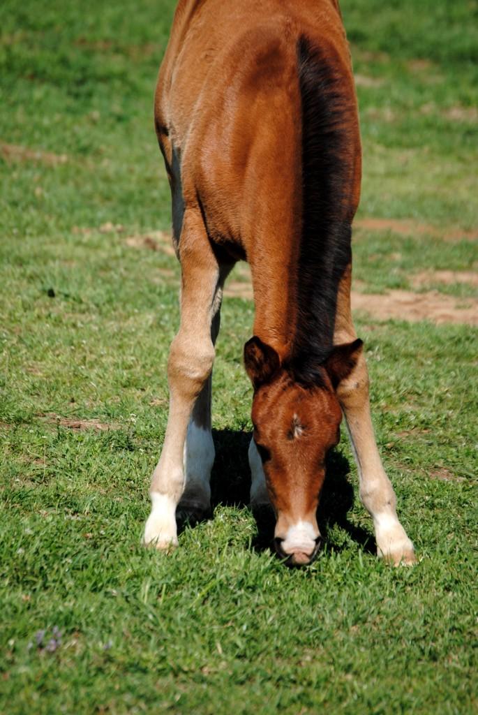 foal .jpg
