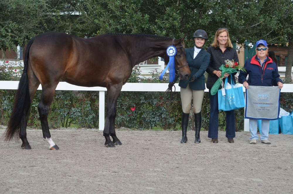 Ryan T, 3 Year Old On-The-Line Champion, bred by Amanda Taylor, raised by McQuay Stables, and now owned by Jamie Martin