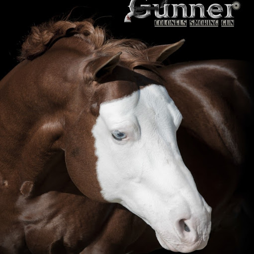 After a great 2017 NRHA Futurity Gunner becomes NRHA's newest ten million dollar sire! His offspring brought home over $200,000 from the NRHA Futurity!