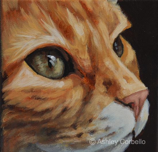orange tabby_ashleycorbello.jpg