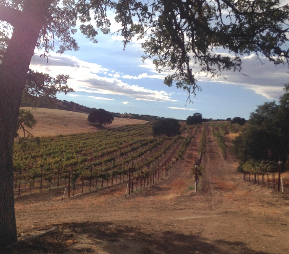 Nightingale Ranch Vineyard