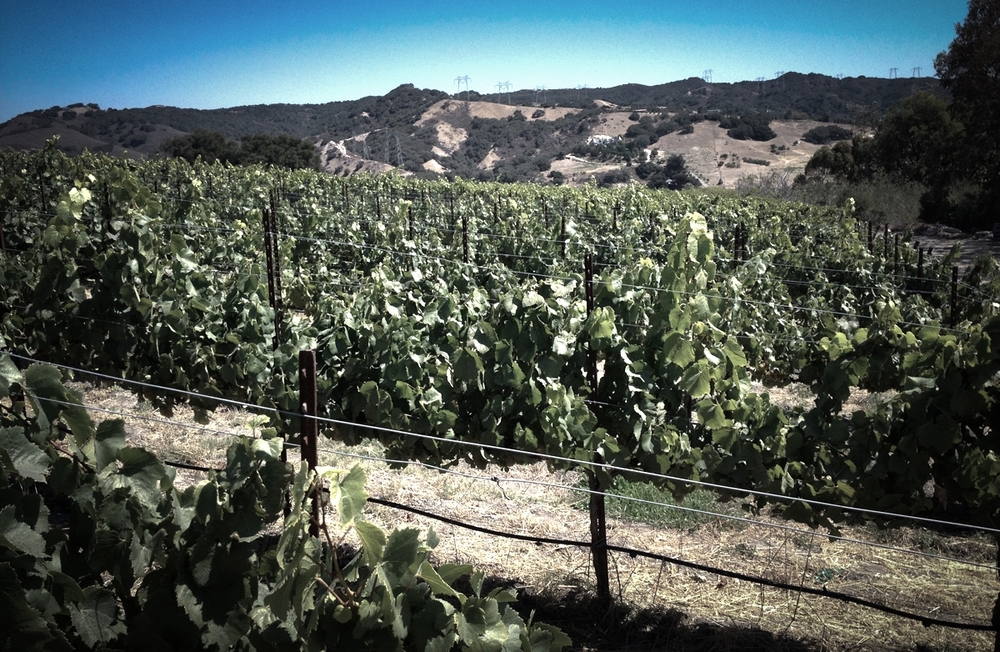 Bassi Ranch Vineyard