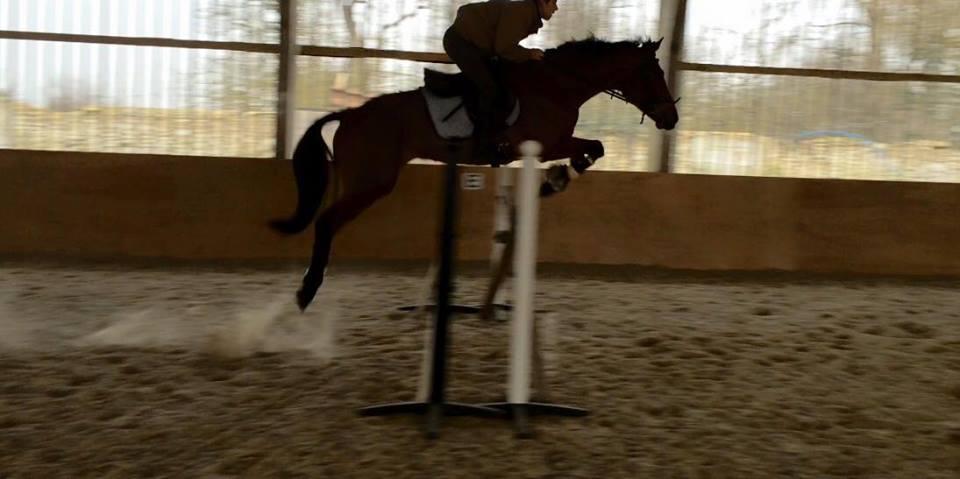Paloma Jumping Gabriel.jpg
