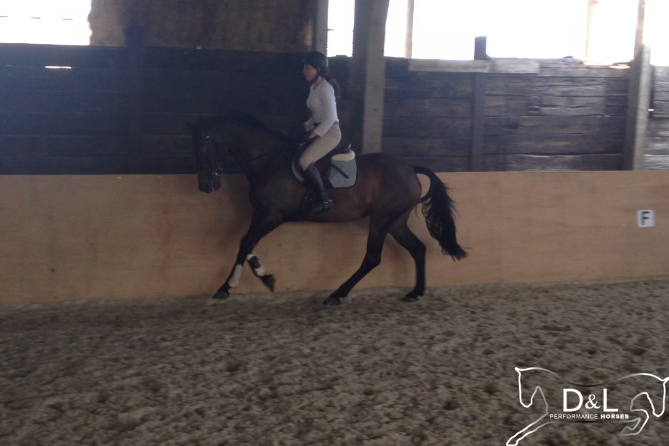 Enjoy Cantering June 2013.jpg