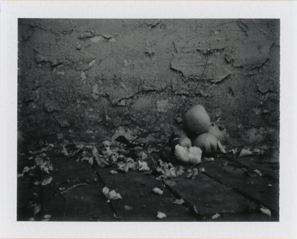 Autumn fruit - Philadelphia, PA    Fujifilm FP 3000b - Polaroid Colorpack ii
