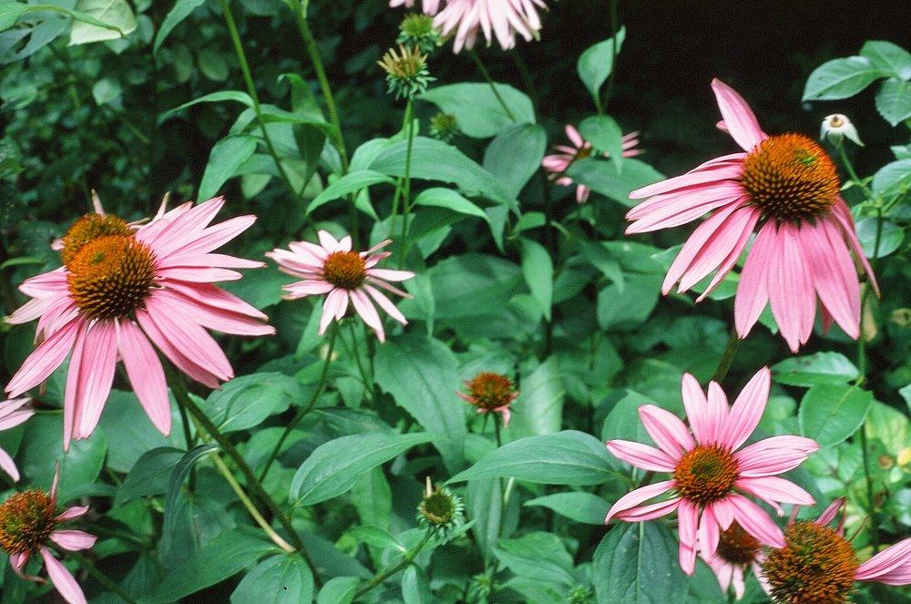 fleur-philly