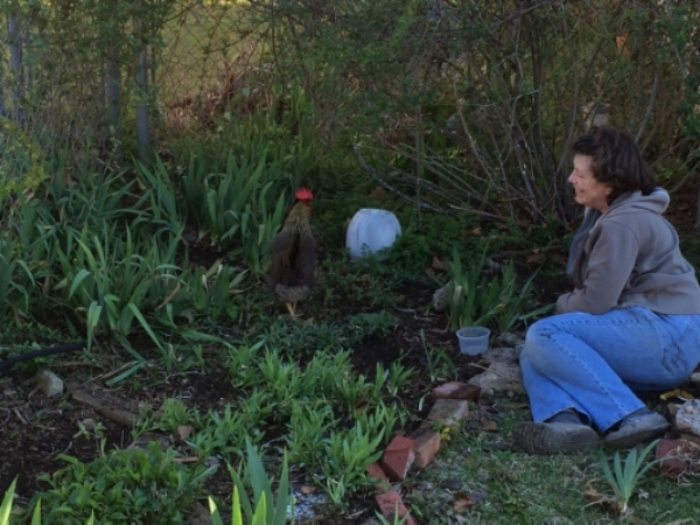 Susan and Sugar the chicken gardening together