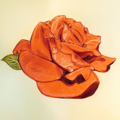 Red rose, colored pencil, by Nancy Lee