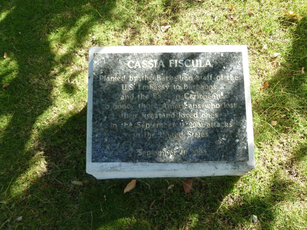 Memorial Trees - Bridgetown, Barbados
