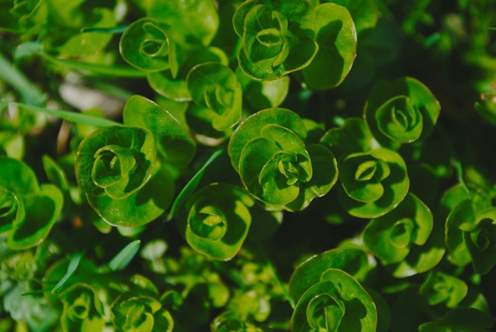 MACRO | Greenery