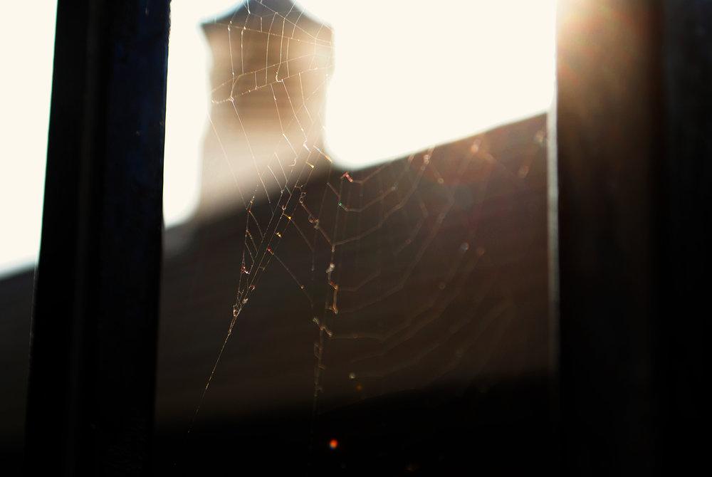 MACRO | Spiderweb