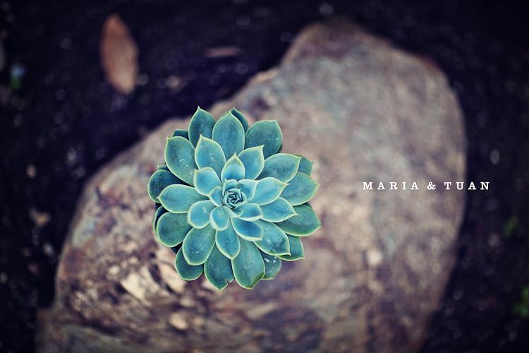 tuan_maria_0001.jpg