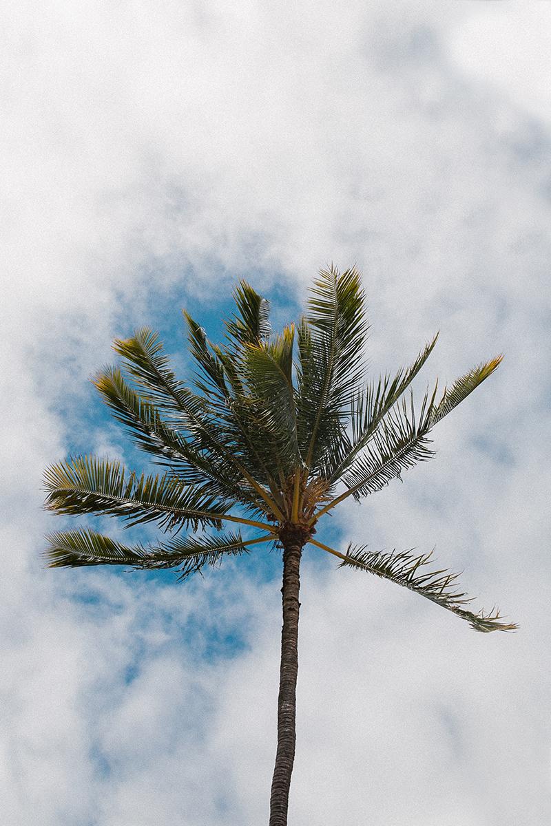 hawaii_-3.jpg